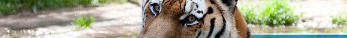Tigerranch.de